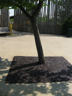 rubber bark tree pit